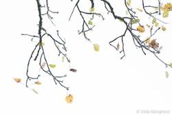 Autumn - The sound of colours - IX