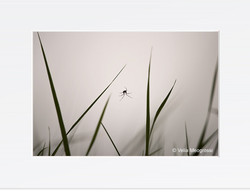 Spider - III