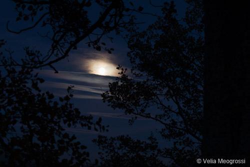 Silent moon - VI