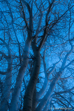 Winter branches - I