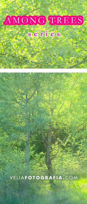 Among_trees_Spring_fresh_green_2.jpg