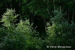 Among trees - XXXIX