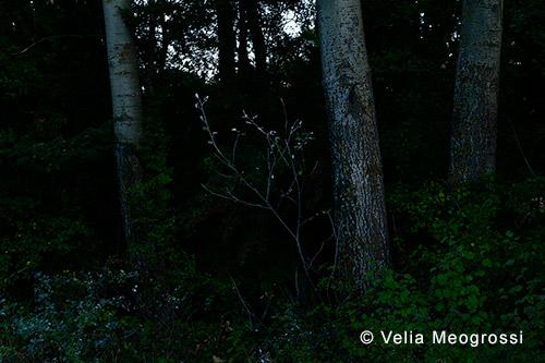 Among trees - III
