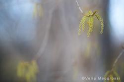 Spring - The sound of colours - XXXVI