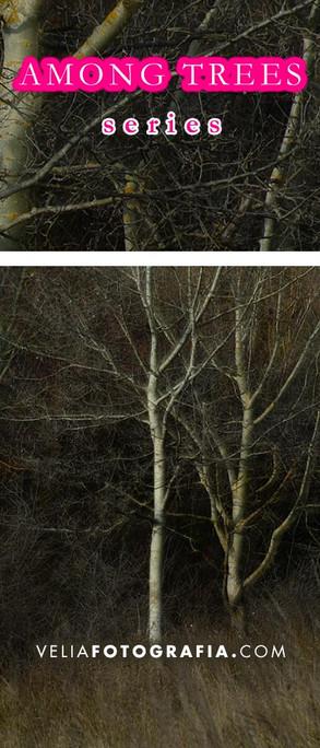 Among_trees_Autumn_4.jpg