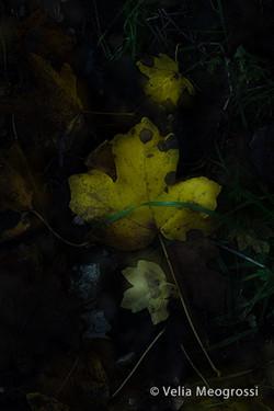 Autumn - The sound of colours - LXVII