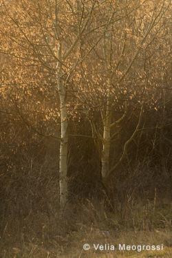 Among trees - XXV
