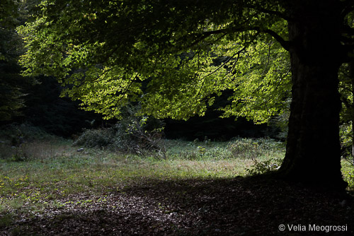 Light and shadow - II