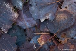 Autumn - The sound of colours - XLIV