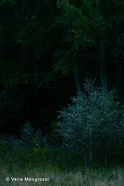 Among trees - IV