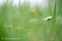 Spring fields - III