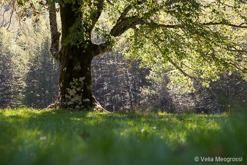 Seasons - I - September fresh shadow