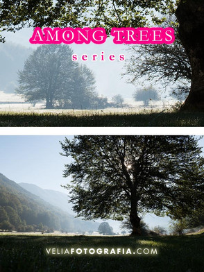 Among_trees_n_green_7.jpg