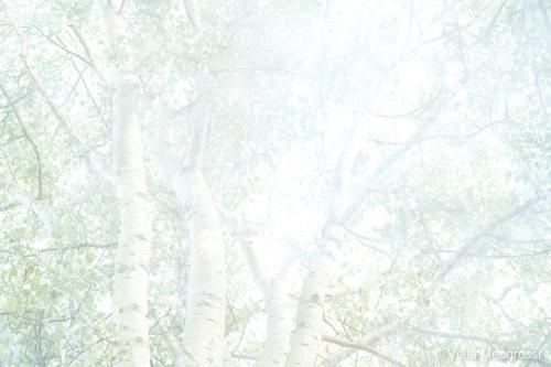 Summer branches - V (long Summer days)