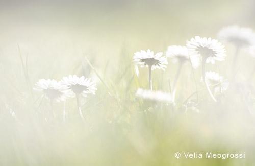 Spring fields - VII