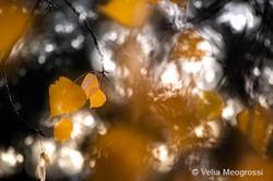 Autumn - The sound of colours - LXVI