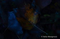 Autumn - The sound of colours - LXX