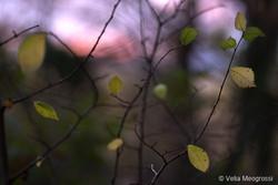 Autumn - The sound of colours - VII
