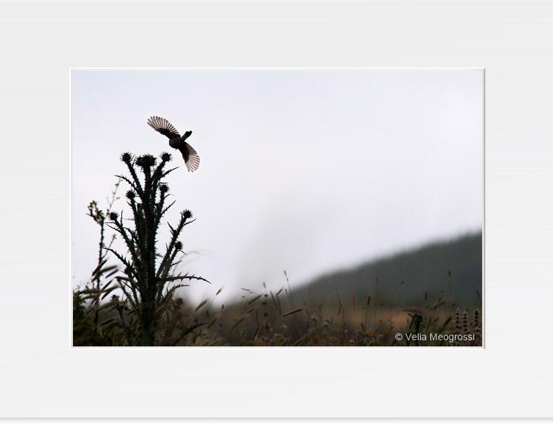 Open wings - II