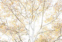 Autumn - The sound of colours - VIII