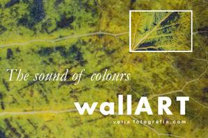 print_the_sound_of_colours_details_aut_2