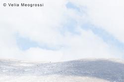 Winter - Sweet view - XXIV