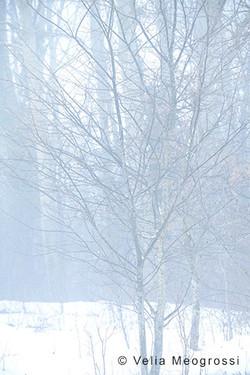 Among trees - XIX
