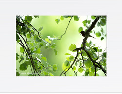 Spring time! (Erithacus rubecula)