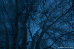 Winter branches - III