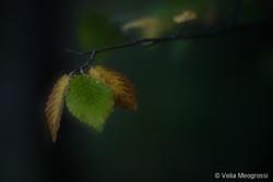 Autumn - The sound of colours - XIX