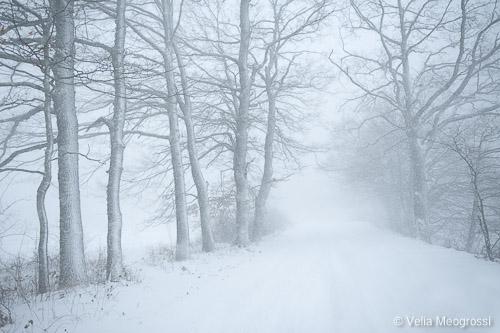 Silent Winter - IV