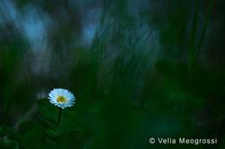 Spring fields - II