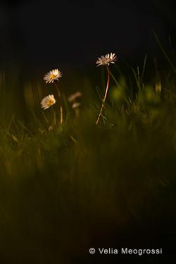Spring fields - IX