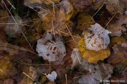 Autumn - The sound of colours - XLI