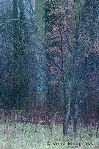 Among trees - XIII