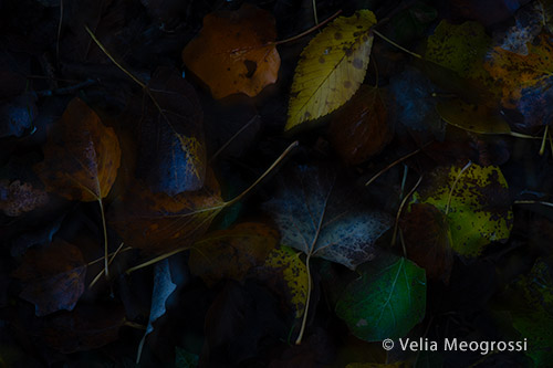 Autumn - The sound of colours - LXVIII