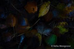 Autumn - The sound of colours - LXVIII