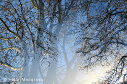 Winter branches - XIII (February days ..