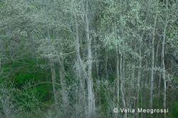Among trees - XXXII