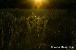 Late summer fields