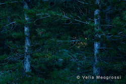 Among trees - XXIX