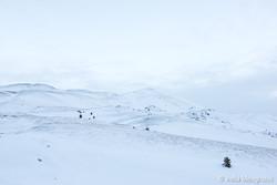 White mountains - I