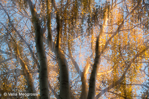 Autumn branches - III (Gold)