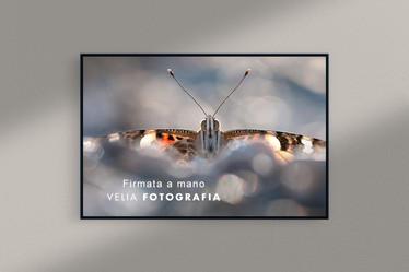 velia_fotografia_butterfly_3.jpg