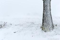 Winter days - II