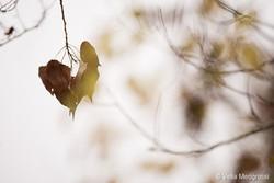 Autumn - The sound of colours - XXXI
