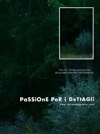 print_Among_trees.jpg