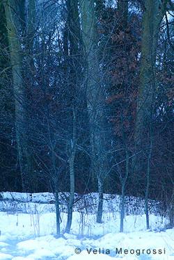 Among trees - XVIII