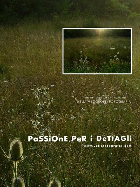 print_summer_field_II.jpg