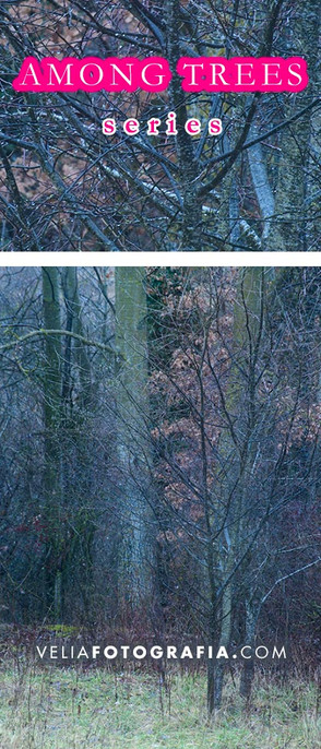 Among_trees_XI_cop.jpg